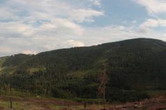 W Dolinie Danielki